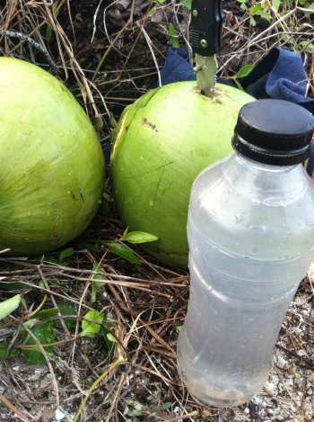 Collecting fresh coconut water while camping on the beach.  The best things in life are free.