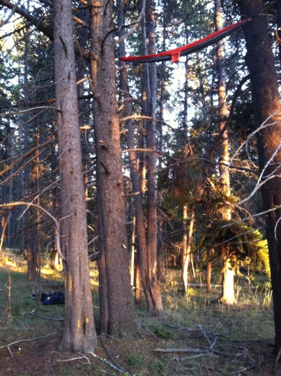 Grizzly-Proof Hammocking, Yellowstone Park, WY